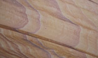 Tic Wood